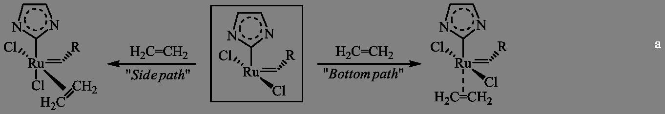 Cis/Trans coordination in olefin metathesis